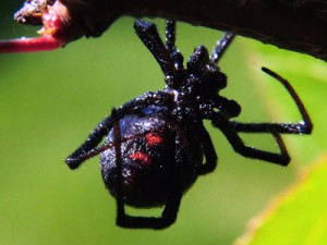 About The Pests Pest Control In Mid Vancouver Island